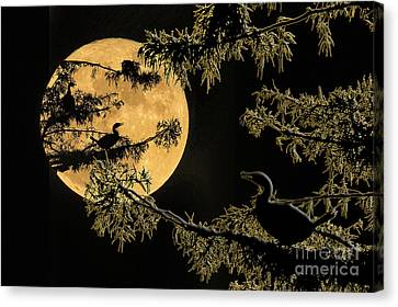 Anhingas In Full Moon Canvas Print by Bonnie Barry