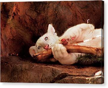 Animal - Cat - My Chew Toy Canvas Print by Mike Savad