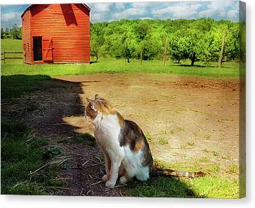 Animal - Cat - The Mouser Canvas Print by Mike Savad
