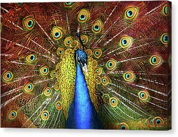 Animal - Bird - Peacock Proud Canvas Print by Mike Savad