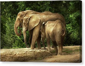 Animal - Elephant - Tight Knit Family Canvas Print by Mike Savad