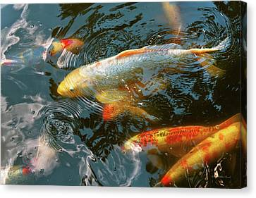 Animal - Fish - Bestow Good Fortune Canvas Print by Mike Savad