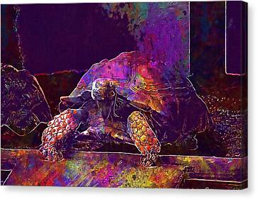 Canvas Print featuring the digital art Animal Turtle Zoo  by PixBreak Art