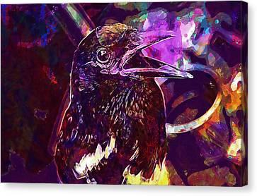 Animals Bird Mynah Pet Pets Talk  Canvas Print