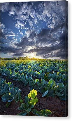 Hdr Landscape Canvas Print - Ankle High In July by Phil Koch
