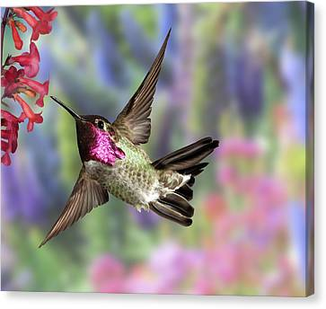 Annas Pastel Background Canvas Print by Gregory Scott