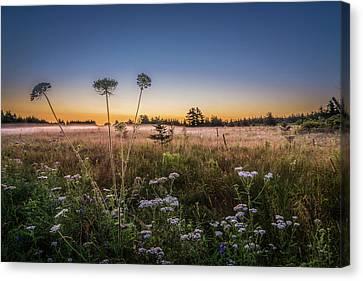 Sunrise Canvas Print - Anne's Lace On Misty Cavendish Meadows by Chris Bordeleau