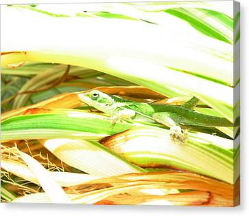 Canvas Print featuring the photograph Anole Sunning by Jeanne Kay Juhos