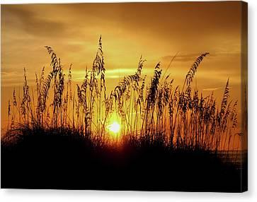 Another Golden Sea Oats Sunset Canvas Print