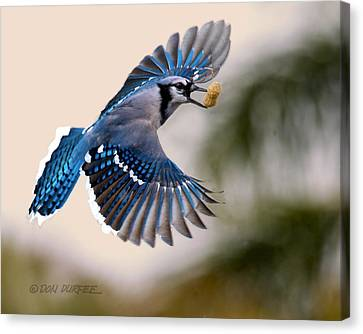 Canvas Print featuring the photograph Another Peanut by Don Durfee