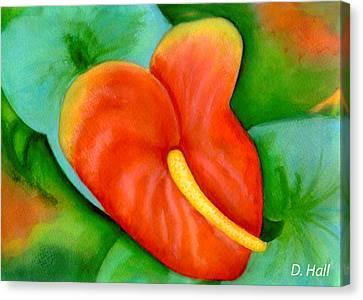 Anthurium Flowers #228 Canvas Print by Donald k Hall