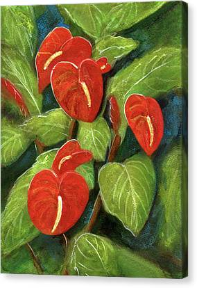 Anthurium Flowers #231 Canvas Print by Donald k Hall