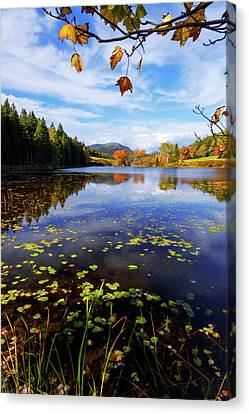 Canvas Print featuring the photograph Anticipation by Chad Dutson