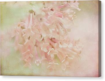 Canvas Print featuring the photograph Anticipation  by Connie Handscomb