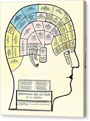 Antique 1857 Phrenological Head And Chart  Canvas Print by Heidi De Leeuw