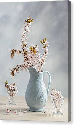 Antique Jug With Blossom Canvas Print by Amanda Elwell