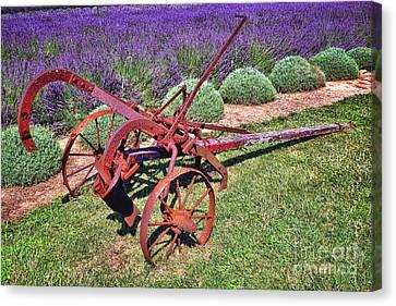 Antique Plow And Lavender Canvas Print