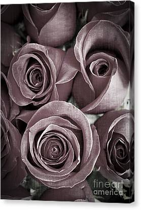 Antique Roses Canvas Print by Edward Fielding