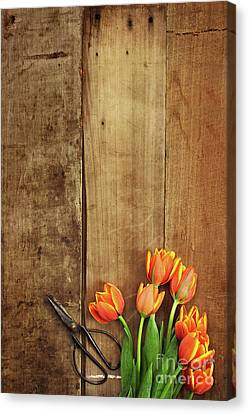 Canvas Print featuring the photograph Antique Scissors And Tulips by Stephanie Frey
