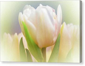 Antiqued Tulip Canvas Print by Mother Nature