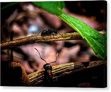 Ant Canvas Print - Ants Adventure by Bob Orsillo