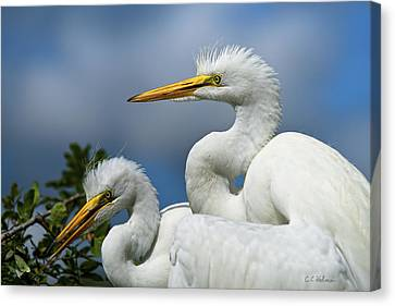 Anxiously Waiting Canvas Print by Christopher Holmes