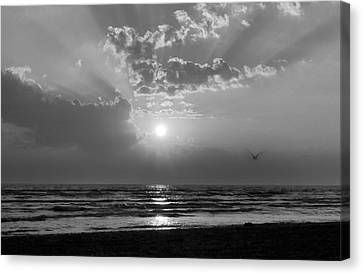 Any Color You Like Canvas Print by Peter Chilelli
