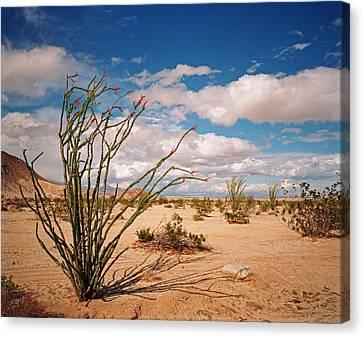 Anza Borrego Desert Canvas Print