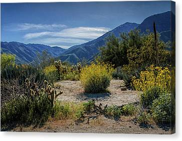 Canvas Print featuring the photograph Anza-borrego Desert State Park Desert Flowers by Randall Nyhof