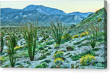 Anza Borrego Twillight Canvas Print by Daniel Hebard