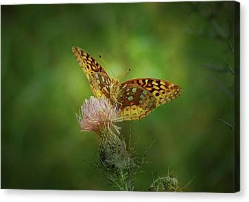 Canvas Print featuring the photograph Aphrodite Fritillary Butterfly by Sandy Keeton