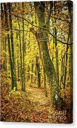 Canvas Print featuring the photograph Appalachian Trail In The Blue Ridge In Autumn Ap by Dan Carmichael