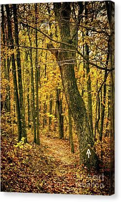 Canvas Print featuring the photograph Appalachian Trail In The Blue Ridge In Autumn by Dan Carmichael