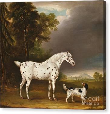 Appaloosa Horse And Spaniel Canvas Print by Thomas Weaver