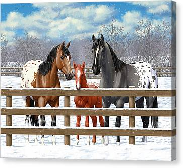 Bay Horse Canvas Print - Appaloosa Horses In Winter Ranch Corral by Crista Forest