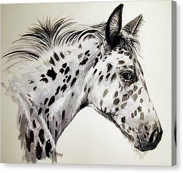 Appaloosa Canvas Print by Keran Sunaski Gilmore