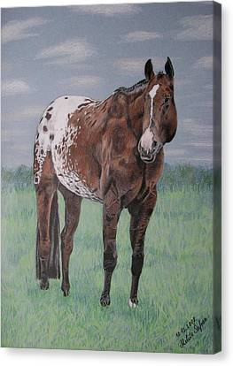 Canvas Print featuring the drawing Appaloosa by Melita Safran