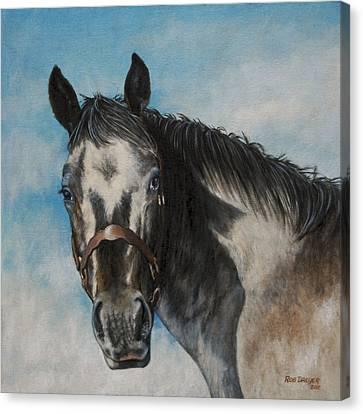 Appaloosa Canvas Print by Rob Dreyer