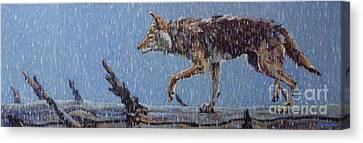 North American Wildlife Canvas Print - Apparition by Patricia A Griffin