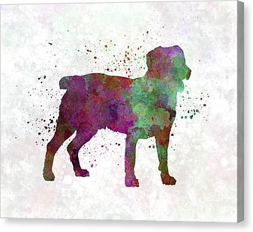 Appenzell Cattle Dog In Watercolor Canvas Print