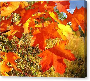 Applause For Autumn Canvas Print by Will Borden