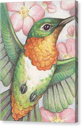 Hummingbird Canvas Print - Apple Blossom Hummer by Amy S Turner