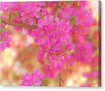 Apple Blossoms A Canvas Print by Leland D Howard