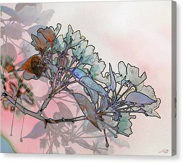 Apple Blossoms Canvas Print by Stuart Turnbull