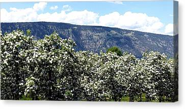 Apple Blossoms Canvas Print by Will Borden