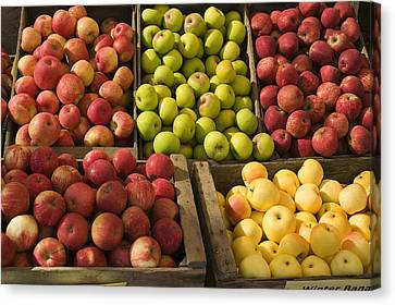 Wooden Box Canvas Print - Apple Harvest by Garry Gay