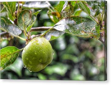 Canvas Print featuring the photograph Apple In Rain by Isabella F Abbie Shores FRSA