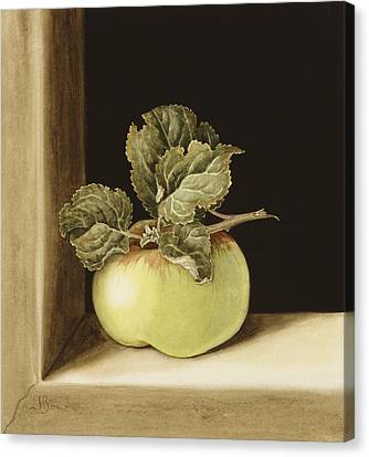 Green Apples Canvas Print - Apple by Jenny Barron