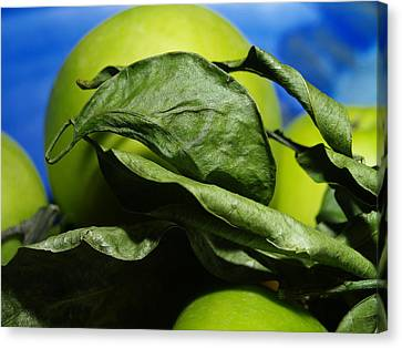 Canvas Print featuring the photograph Apple Leaves by Michael Canning