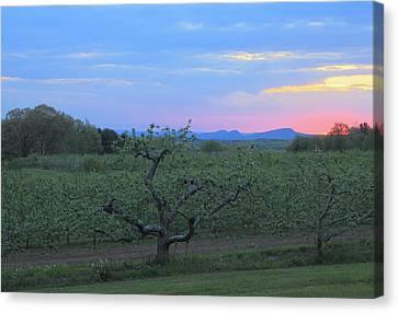 Apple Orchard And Holyoke Range At Sunset Canvas Print